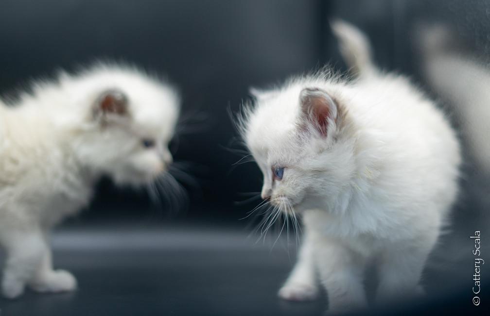 birdynest1_kitten2, BirdyNest1_kitten3_1