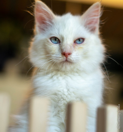 RosaNest2_kitten4_02 juni 2021_DSC06815.