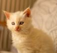 RosaNest2_kitten5_28 april 2021_DSC06389