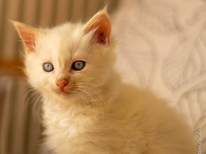 Kittens van Rosa