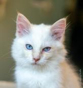 RosaNest2_kitten4_02 juni 2021_DSC06806.