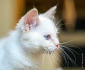 RosaNest2_kitten3_02 juni 2021_DSC06744.