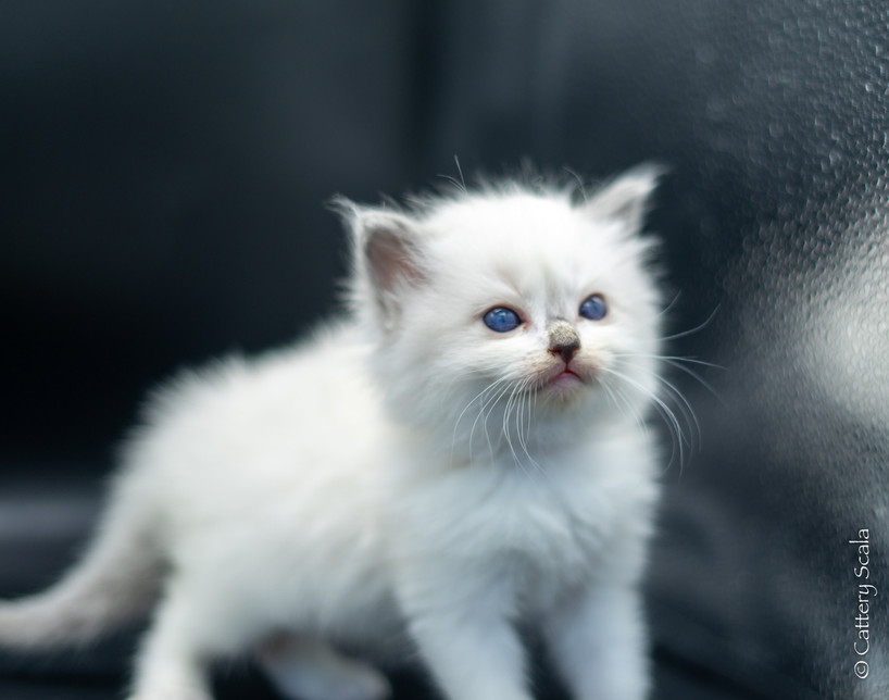 birdynest1_kitten1_14 februari 2021_DSC0