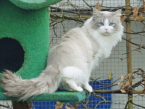 Olivia & Binky, love birds in besneeuwde tuin