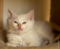 RosaNest2_kitten6_28 april 2021_DSC06391