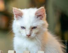 RosaNest2_kitten4_02 juni 2021_DSC06809.