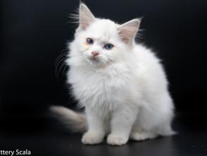 Een klein fotoshoot van de kittens in huis