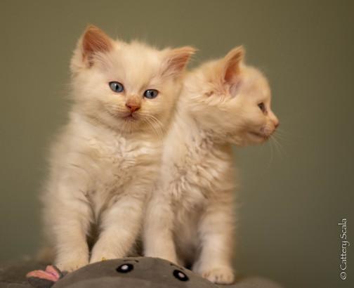 RosaNest2_kitten6, RosaNest2_kitten7_28