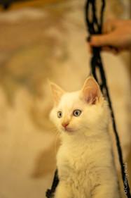 RosaNest2_kitten6_18 mei 2021_DSC06567.j