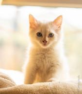 RosaNest2_kitten4_24 april 2021_DSC06326