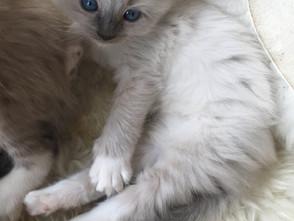 De kittens zijn aan het groeien