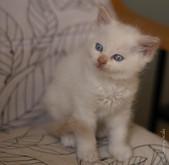 RosaNest2_kitten6_28 april 2021_DSC06400