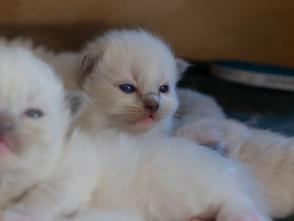 Pippa en haar kleintjes