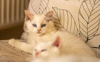 birdyNest1_kitten5, RosaNest2_kitten5_28