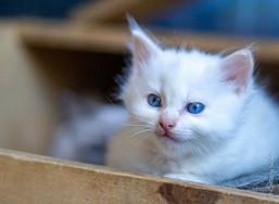 RosaNest2, RosaNest2_kitten4_02 april 20
