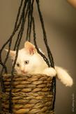 RosaNest2_kitten6_18 mei 2021_DSC06570.j
