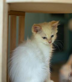 RosaNest2_kitten7_02 juni 2021_DSC06775.