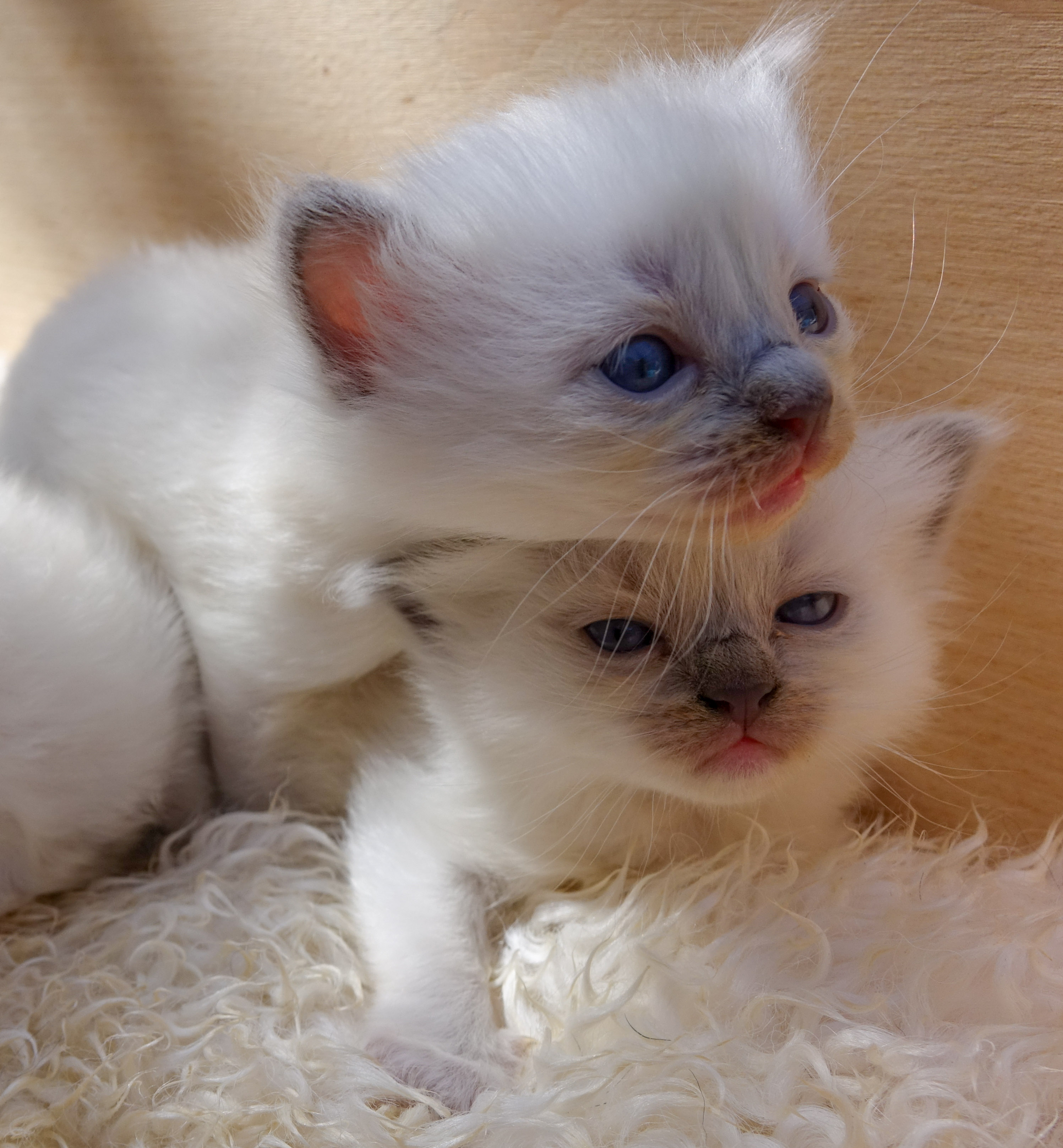 Nestje Donna & Legolas