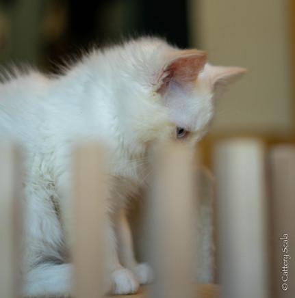 RosaNest2_kitten4_02 juni 2021_DSC06818.