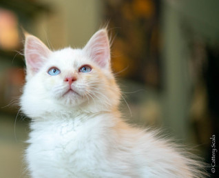 RosaNest2_kitten4_02 juni 2021_DSC06807.