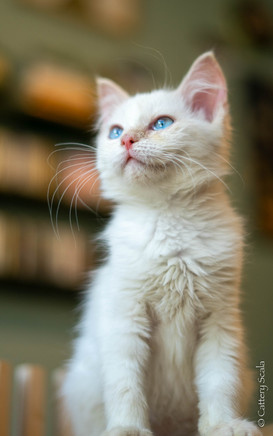 RosaNest2_kitten3_02 juni 2021_DSC06753.