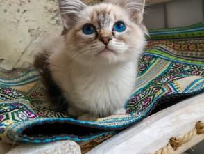 Alle kittens zijn vertrokken: LouLou