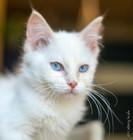 RosaNest2_kitten3_02 juni 2021_DSC06745.