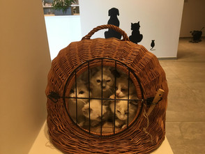 Bezoekje naar de dierenarts, laatste keer voor het nestje van Pippa