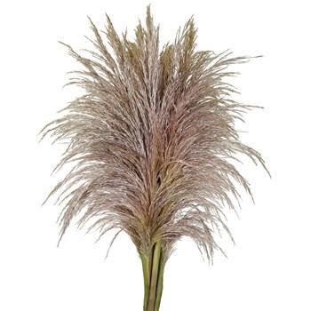 Flowers, Fifty Flowers, Pampas, Grass, Stem, wholesale, filler, accent, fall, wedding, arrangements, Decor, Reception, Event, Planning, Planner, Columbia, MO, Blue Diamond Events