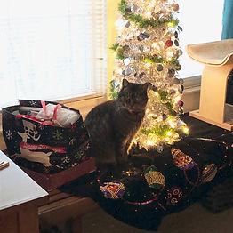 gray cat 1218.jpg