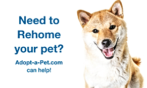 adopt-a-pet-rehome.png