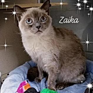Zaika_.png