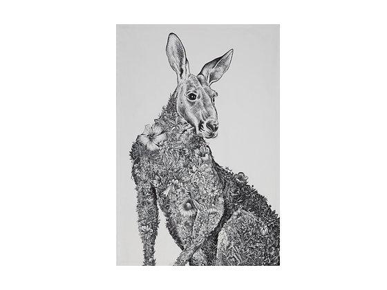 MW Marini Ferlazzo Wildlife Tea Towels 50x70cm Kangaroo
