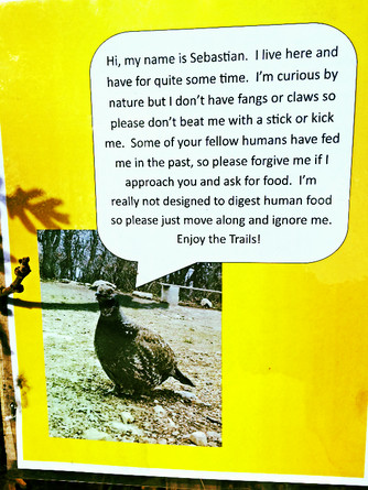 seb the turkey.