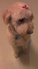 Screened Verified Goldendoodle and Labradoodle Breeders