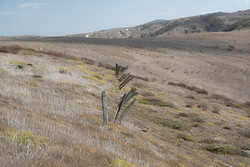 Weathered Sheep Fence