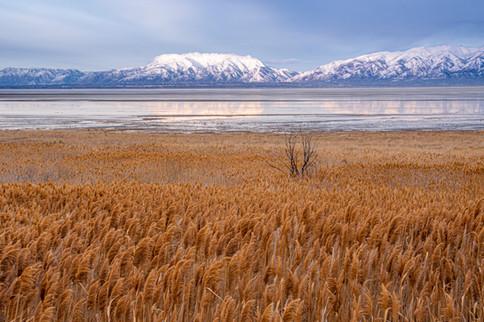 Fields in Antelope Island