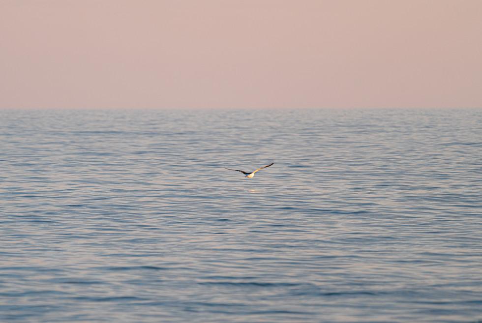 Sea Glide