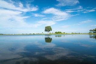 Tree Reflections in the Okavango