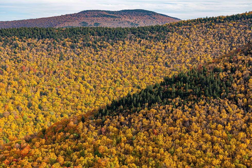 Peak Foliage at Hunter Mountain