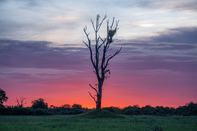 Sunset in the Okavango