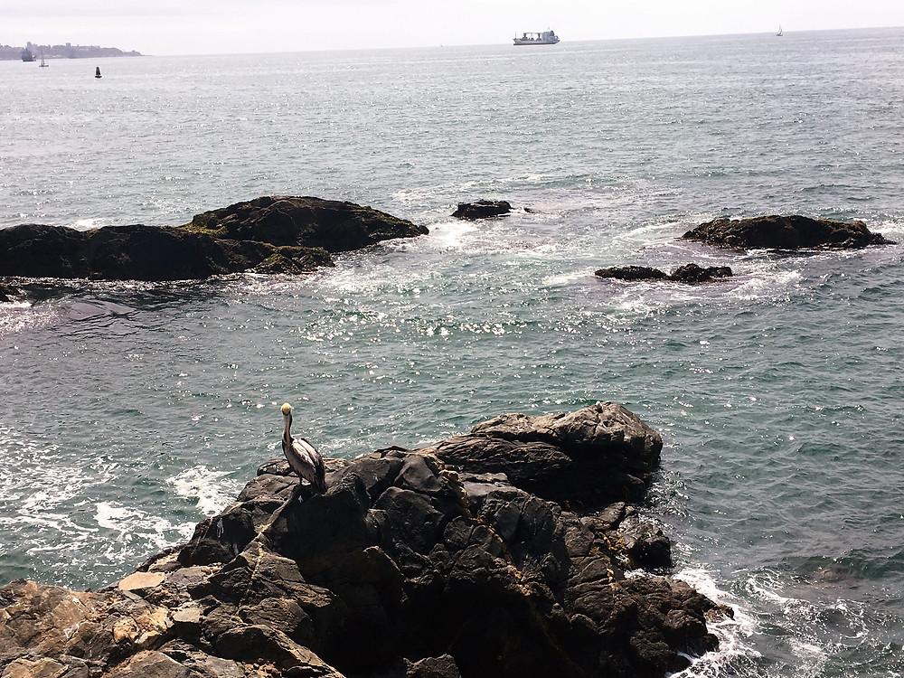 Viaje com pouco em Viña del Mar - Chile