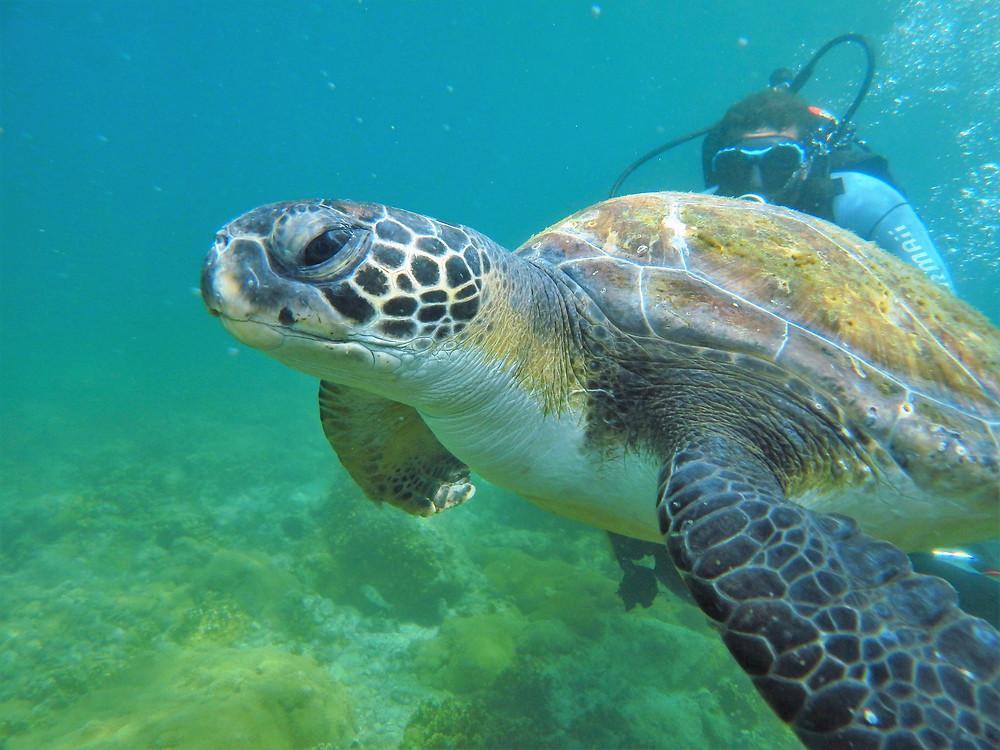 Tartaruga em Arraial do Cabo