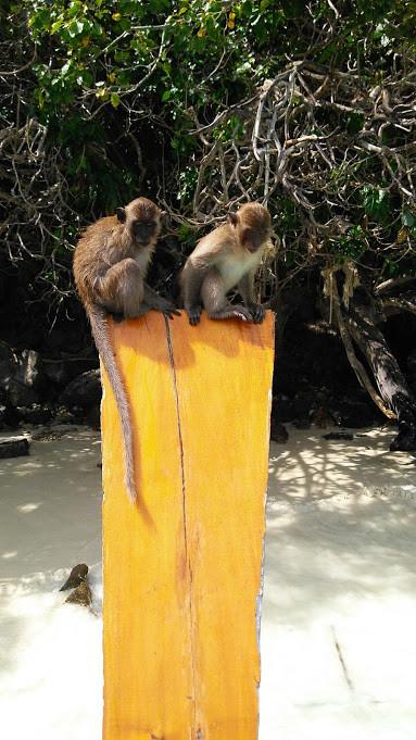 Monkey Beach - viaje com pouco
