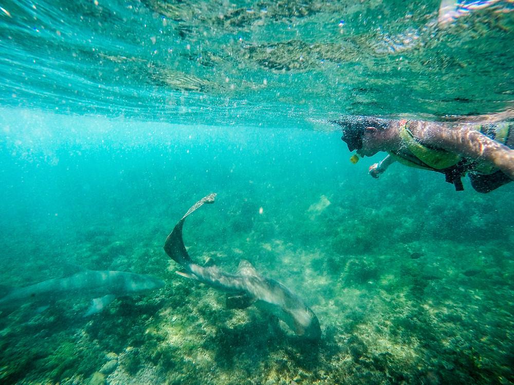 Viaje com pouco - Fernando de Noronha - Praia do Sueste - tubarão