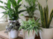 Houseplants 3.jpg