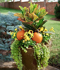 Fall container garden 2.jpeg