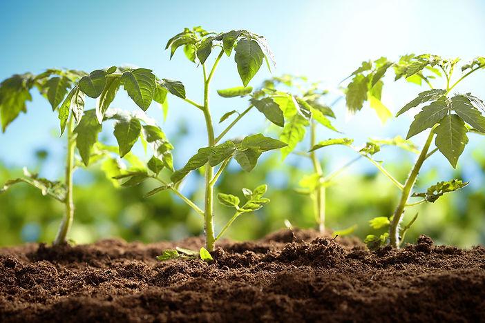 Veggie Seedlings 3.jpg