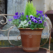Winter Container Garden.jpg