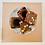 Thumbnail: Brownie Box